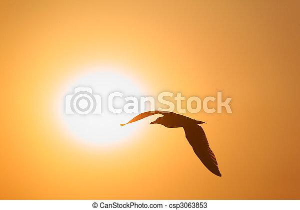 Silhouette of bird opposite sun - csp3063853
