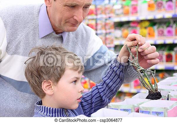 elderly man with boy in shop choose  rose sapling - csp3064877