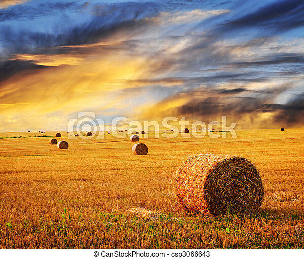 Golden sunset over farm field - csp3066643