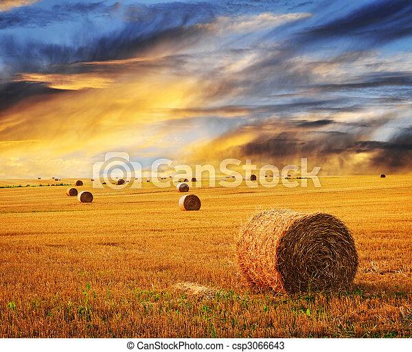 Golden sunset over farm field - csp3066643