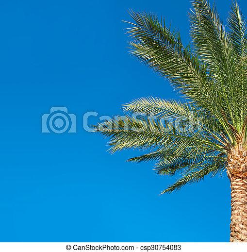 Beautiful palm tree on blue sky background - csp30754083
