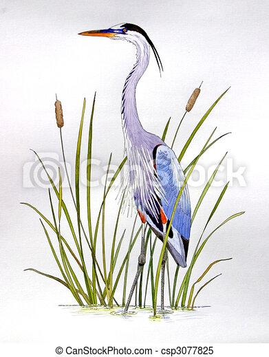 Great Blue Heron - csp3077825