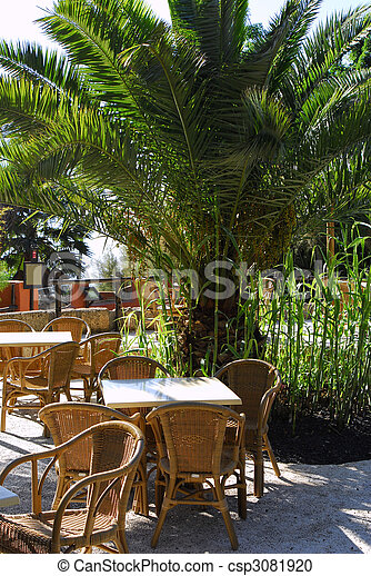 photographies de exotique paume arbre ext rieur