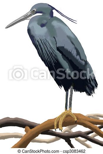 Western Reef-Heron - csp3083462