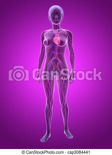 woman - vascular system - csp3084441