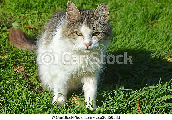 Funny cat on the grass