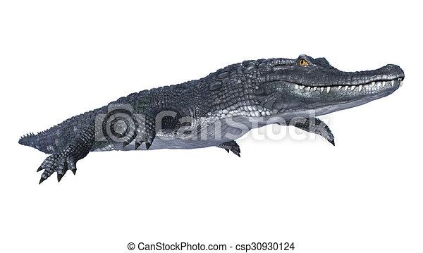 Caiman Alligator Drawings