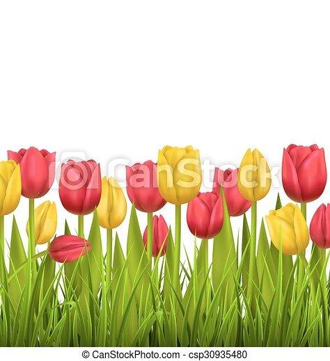 Vettore di prato, fiore, natura, Tulips, isolato, verde, bianco ...