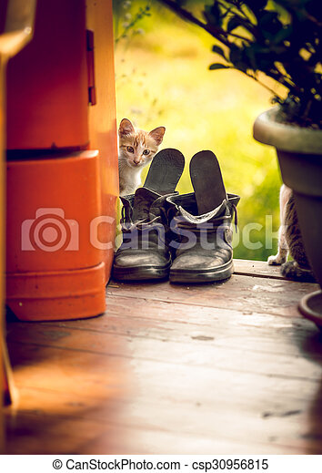 Toned shot of cute white kitten looking out of the old old shoe
