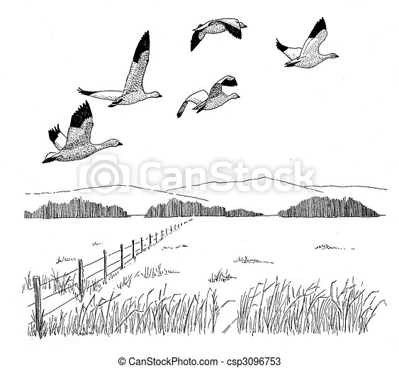 Geese Flying Drawing Snow Goose Csp3096753