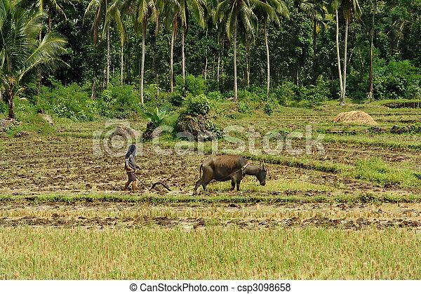 Primitive subsistence farming wiki
