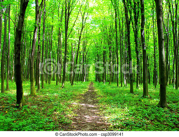 natureza - csp3099141