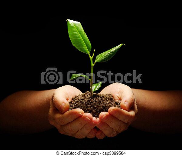plant in hands - csp3099504
