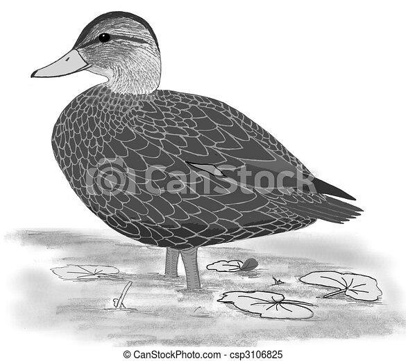Duck - stock illustration, royalty free illustrations, stock clip ...