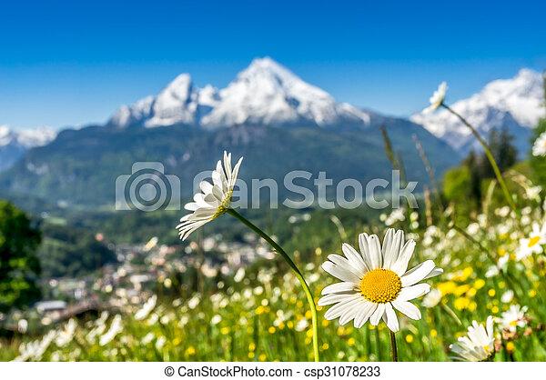 Bavarian Alps with beautiful flowers and Watzmann in springtime, Germany - csp31078233