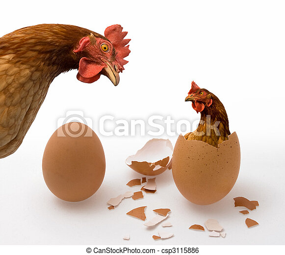 Chicken or Egg - csp3115886