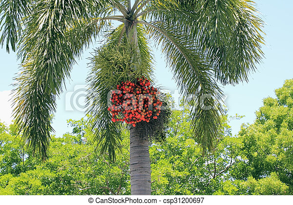 Ripe Palm Tree Fruit - csp31200697
