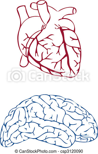 heart and brain, vector - csp3120090