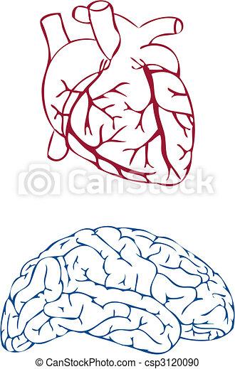 heart and brain, vector - csp3120090