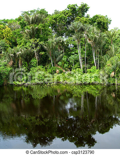 Rain Forest mirrored in a lagoon            - csp3123790