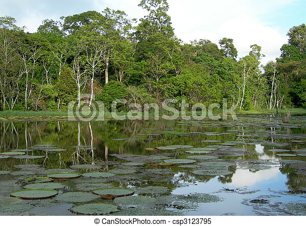 Rain Forest mirrored in a lagoon - csp3123795