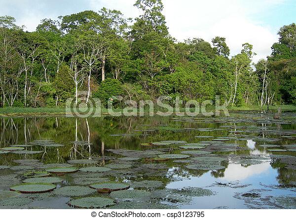 Rain Forest mirrored in a lagoon - csp3123795