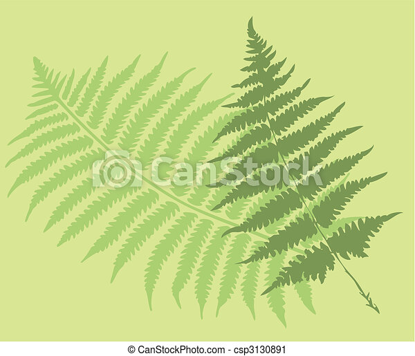 fern leaves - csp3130891