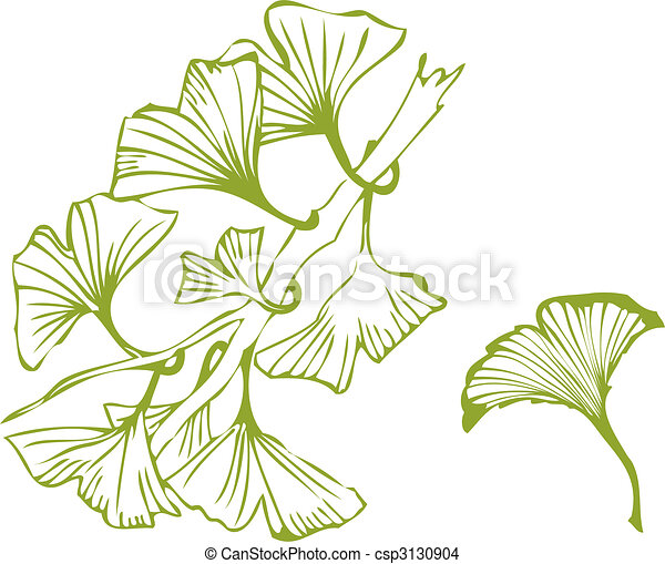 ginko leaves - csp3130904