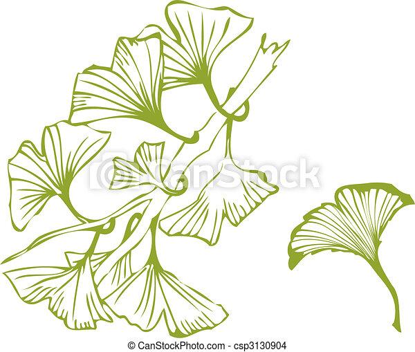 ginko leaves - csp3130904