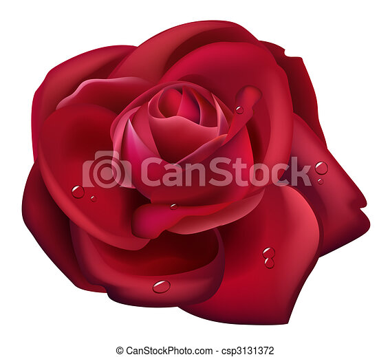 Red Rose and water drop - csp3131372