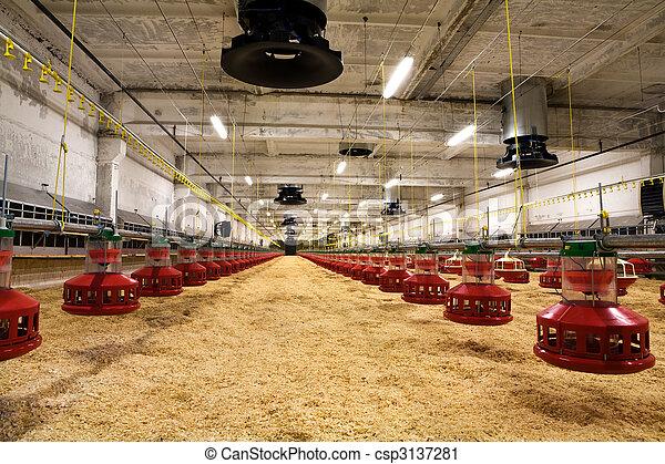 poultry farm - csp3137281