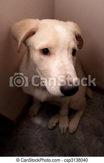 dog sits in a corner - csp3138040