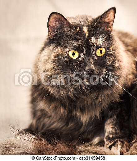 a brindle colored house cat sitting with her tail wrapped around her feet with a very shallow depth of field.