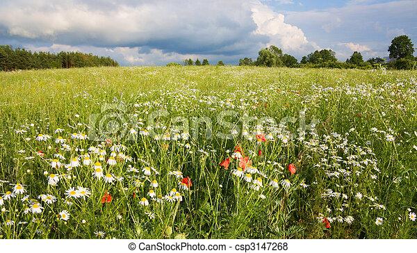 field of flowers, summer landscape - csp3147268