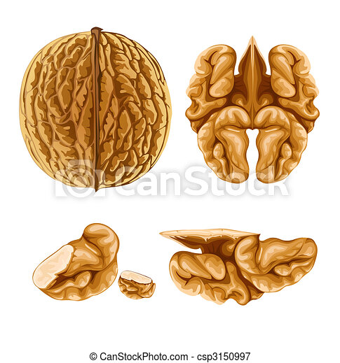 Stock Illustrations of walnut nut with shell ...