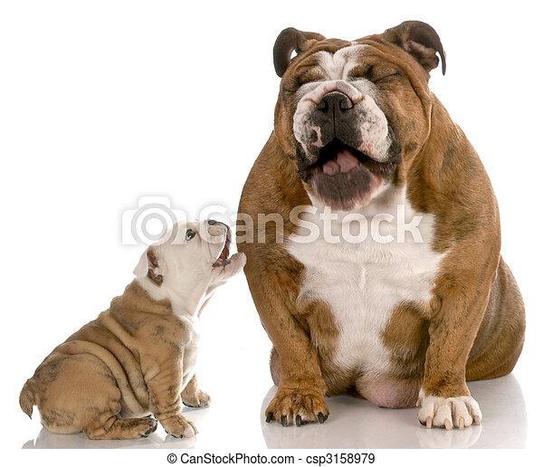 dog laughing at puppy barking - csp3158979