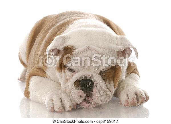 doente, Filhote cachorro - csp3159017