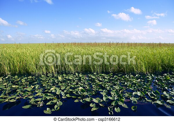 Blue sky in Florida Everglades wetlands green plants horizon, nature - csp3166612