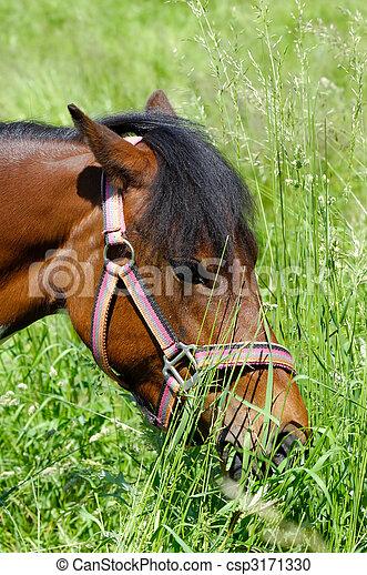 Xvideos Horse Comendo Mulher