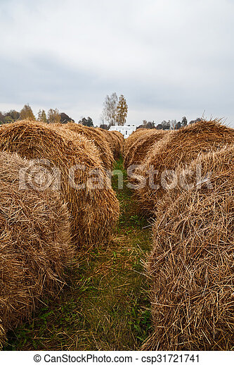 Bales of hay lie in a field - csp31721741