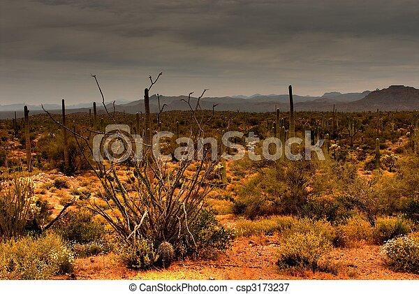 Desert Storm Approaching - csp3173237