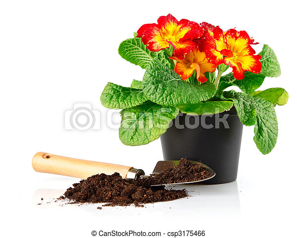 flowerpot with red flowers and soil in shovel - csp3175466