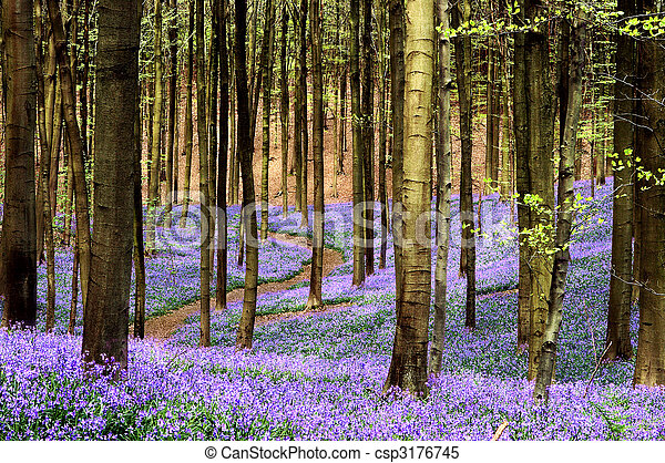 Curving path through a blue carpet of bluebells in springtime