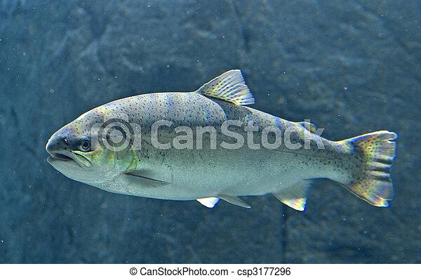 King Salmon - csp3177296