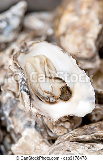Cooked oysters - csp3178478