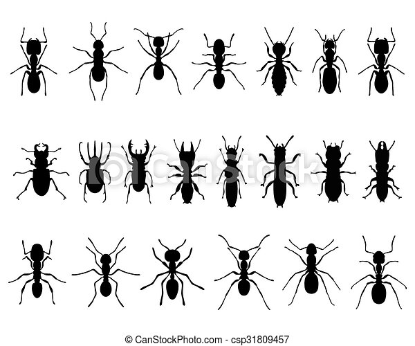 Clip Art Ants and Termites