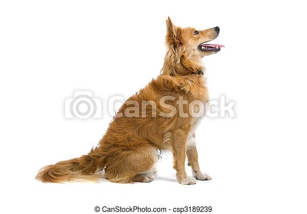 mixed breed dog - csp3189239