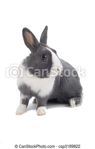 grey and white rabbit - csp3189822