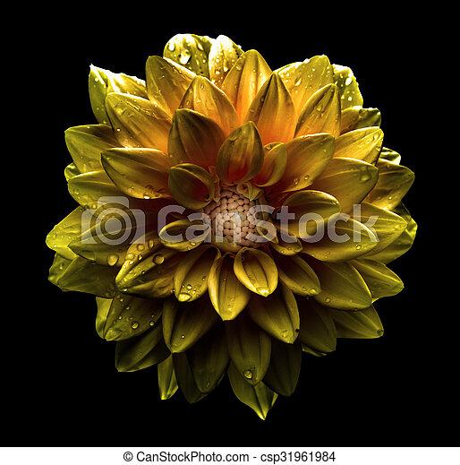 image de surréaliste, fleur, fond, macro - surreal, macro, flower