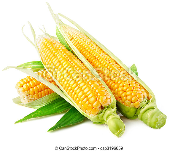 fresh corn vegetable with green leaves - csp3196659